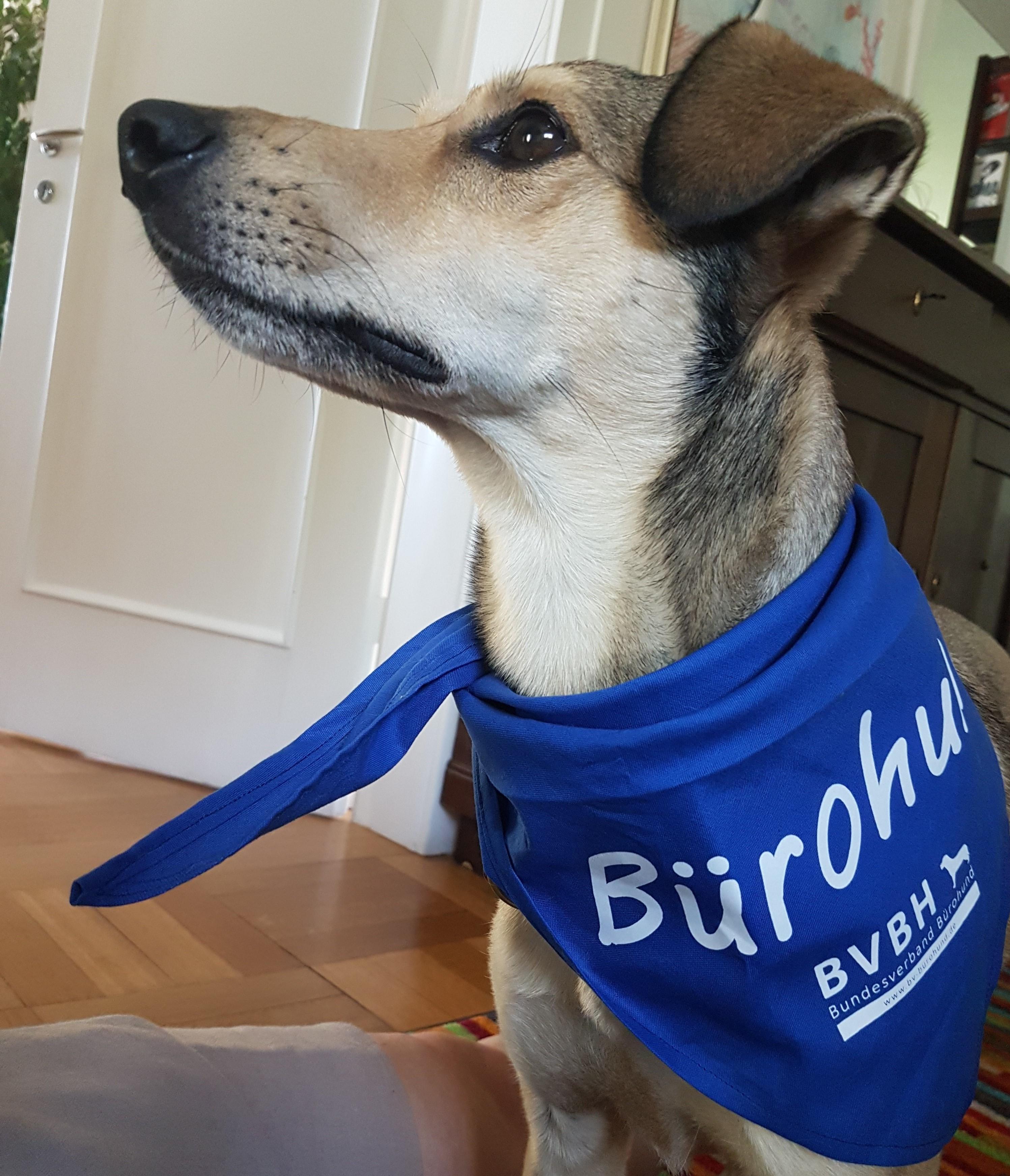 ein Bürohund sorgt für Entspannung und Stressreduktion